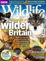 311x413xBBC,P20Wildlife,P20Magazine_August,P202014,P20issue_313_416_jpg_pagespeed_ic_8FDGJZy8YW