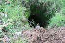 badger-hole